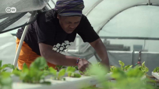 Urban gardening in Johannesburg is yielding abundant crops and helping people out of poverty.