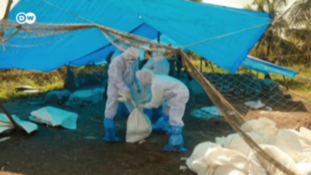 Bird-flu outbreak hits India hard