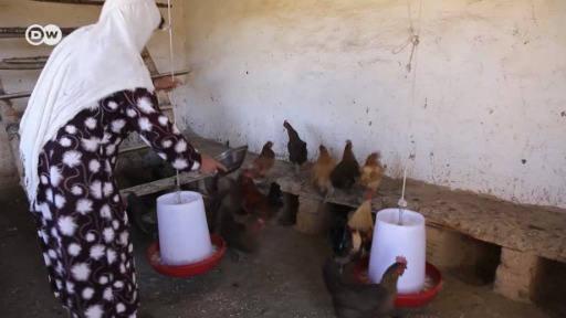 How chickens are improving Afghan lives