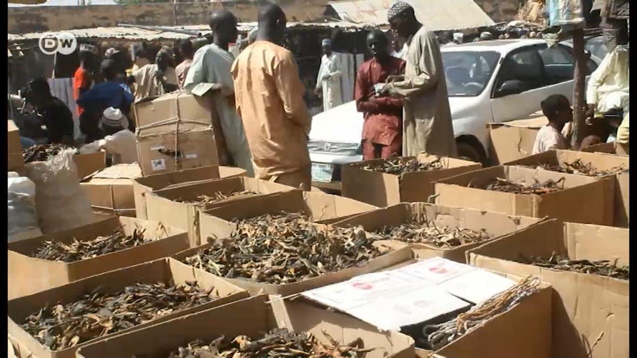 Explore West Africa's largest frog market