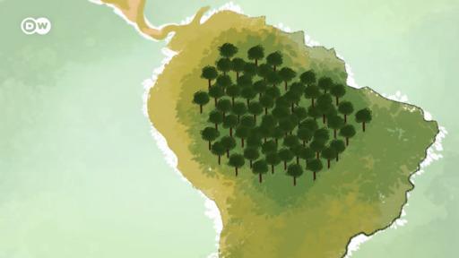 Amazônia brasileira: história de destruição